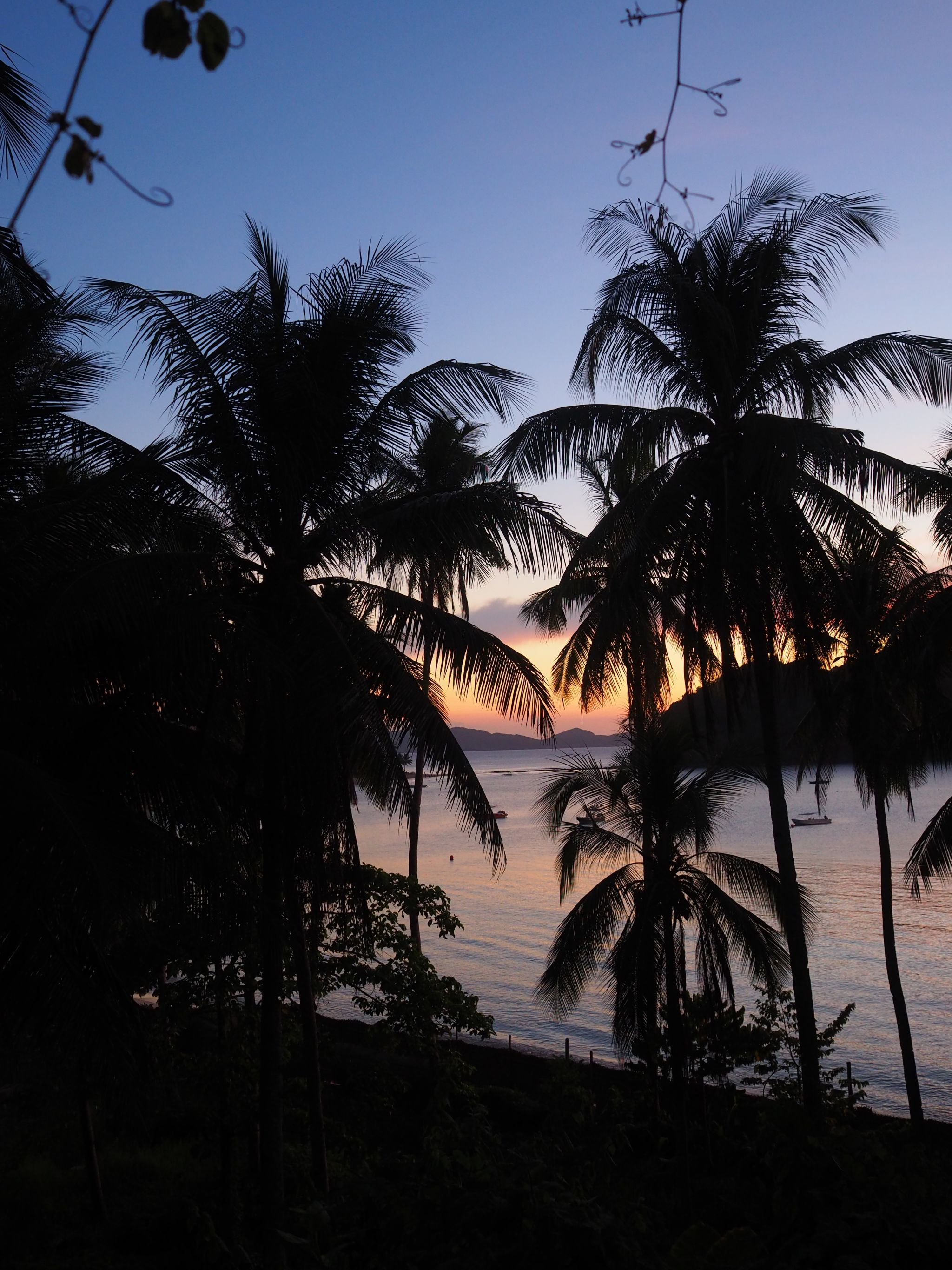 Philippines sunset with palm trees
