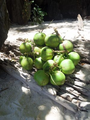 Philippines coconuts
