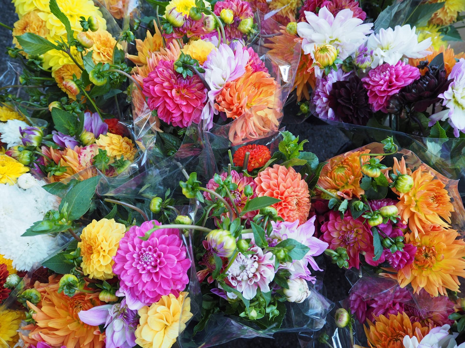 Dahlias Deal market